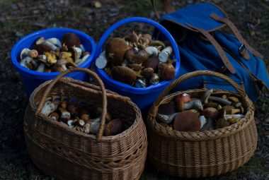 Foraging For Mushrooms