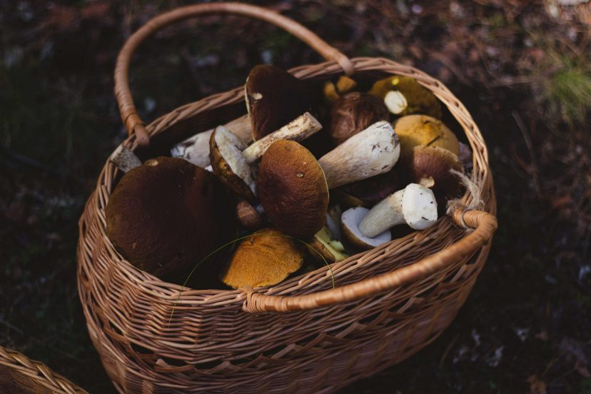 Medicinal Mushrooms In A Basket