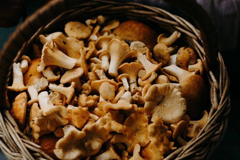 Variety Of Mushrooms
